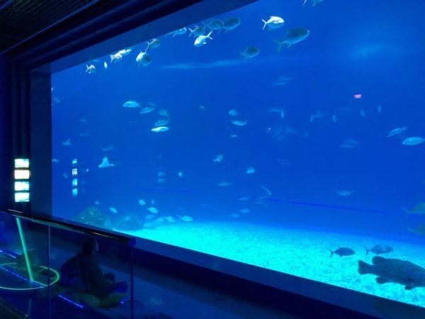 プリモスキー水族館
